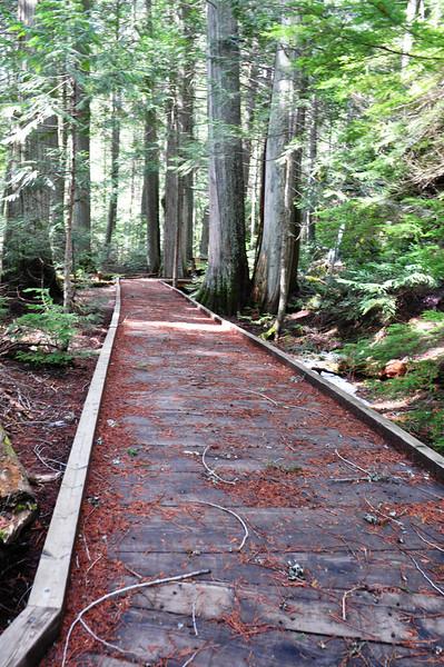 Trail of the Cedars @ Glacier National Park