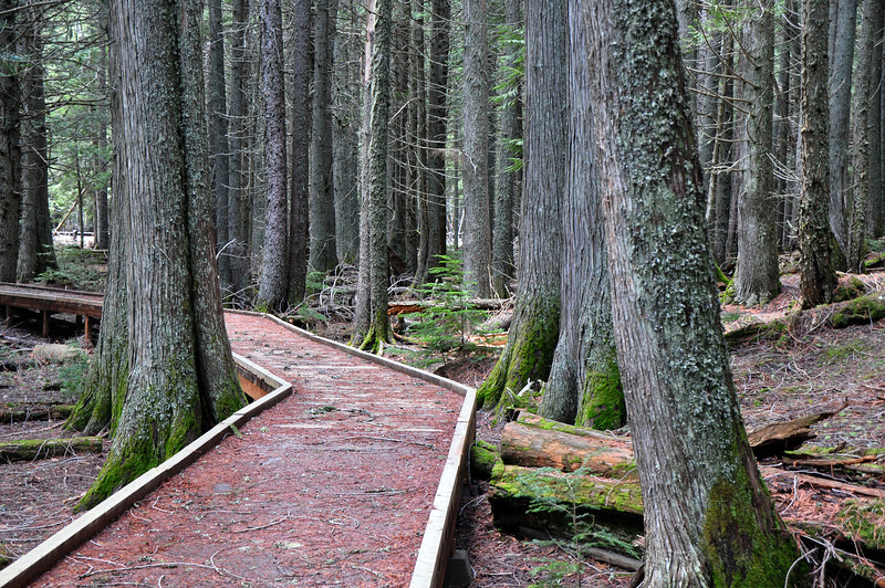 Trail of the Cedars @ Glacier National Park