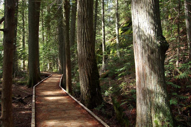 Trail of the Cedars, Glacier National Park