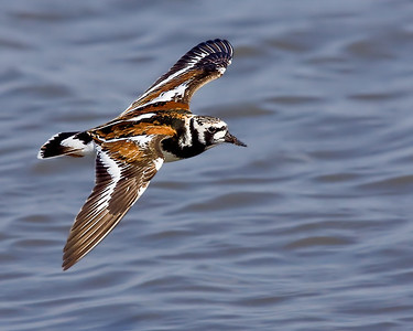 MOS Bird Photography Class