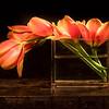 Five Orange Tulips