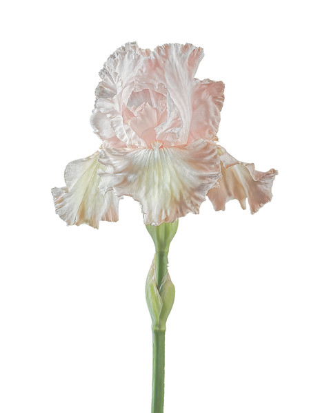 High Key Iris