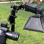 """This image illustrates my Siegelite articulating flash bracket with Canon 550EX flash modified with Lumiquest mini softbox.  This bracket is no longer produced however, it is often available used on eBay (most often for less than $20 USD).  The flash is connected to the camera with a Canon Off Camera Sync Cord.  Both the cord and softbox are available as Chinese knock-offs from eBay at a very low price.  This setup is shown on a tripod for illustration purposes but, I most often use it hand-held in order to follow the little creepy-crawlies which I photograph.<br /> <br /> The Siegelite bracket can also be used very effectively as a non-macro flash bracket.  It can also be equipped with a mini-umbrella.<br /> <br /> The camera in this case is a Canon 10D and the lens is the Tamron 90mm f/2.8 AF SP Macro.  This is the model previous to the present issue Tamron 90mm f/2.8 AD SP Di Macro lens.  The """"Di"""" designator indicates that the lens has been optimized for digital sensors but, my non-Di model provides IQ right up there with my """"L"""" quality lenses.  BTW:  the older Tamron """"Adaptall"""" f/2.5 Macro lens will not work wll on EOS cameras."""