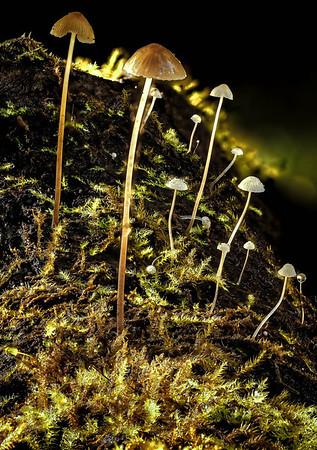 Micro Mushrooms