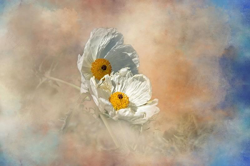Thistle Blossum