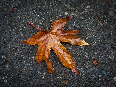 Fallen Leaf.