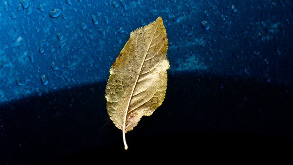 Floating or Attached: Is it a brilliant leaf caught on a wet fender or is it peacefully floating through the air ?