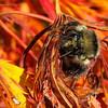 Bumblebee-20131023-19
