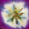 Flowers-20130415-08