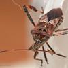 Beetle-20131010-33