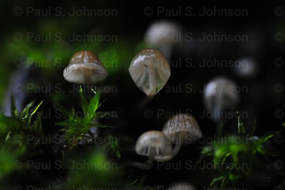 Mushrooms_In_Moss_02
