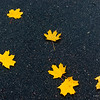 Autum leaves on pavement, nature photography
