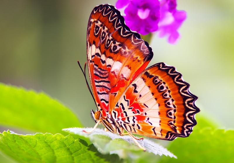 Fairchild Tropical Botanic Gardens<br /> Coral Gables, FL