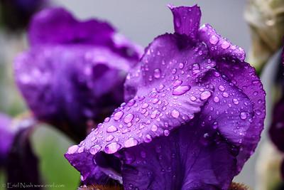 Flowers-20130521-10