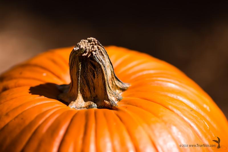 Pumpkin close up, macro photography