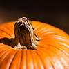 Pumpkin close up, macro photography