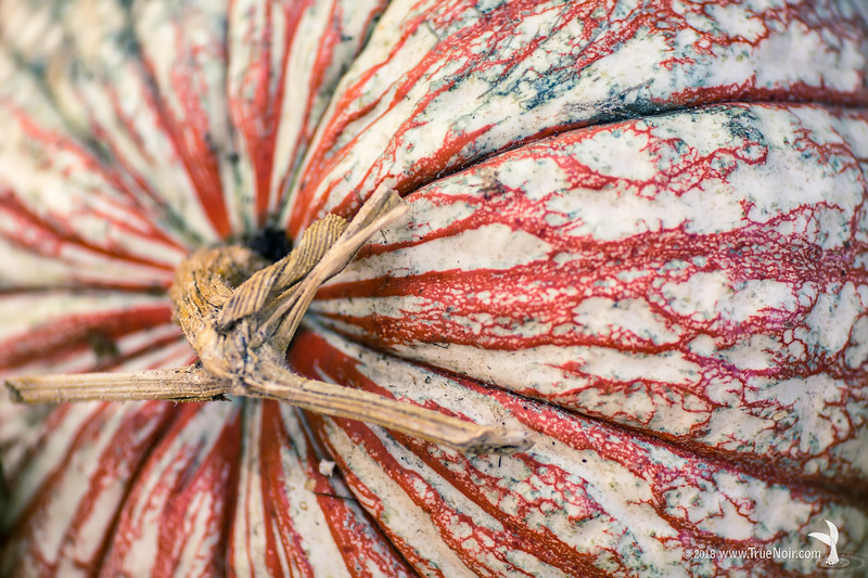 One too many pumpkin, macro photography