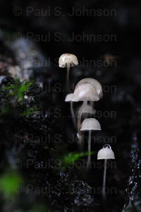 Mushrooms_In_Moss_01
