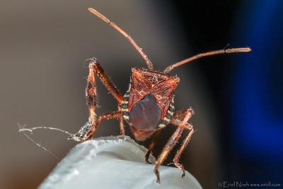 Beetle-20131009-17