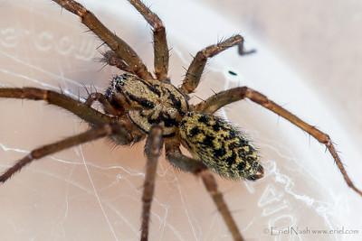 Spider-20130805-03