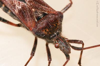 Beetle-20131010-43