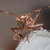 Beetle-20131009-15