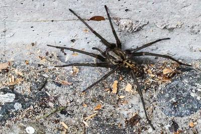 Spider-20130802-03