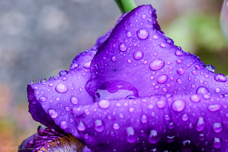 Flowers-20130521-07