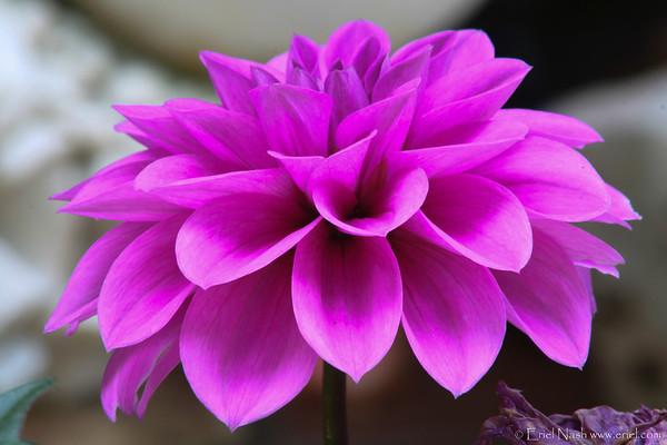 Flowers-20120519-21-1