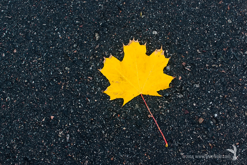 Yellow leaf on pavement, nature photography