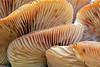 7798 Mushrooms