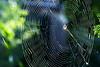 1247 Spider Web
