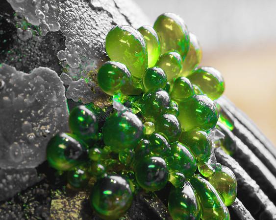 1120 Bubble Algae