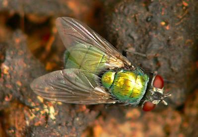Green Fly FZ20 12x + Nikon 6T - f2.8, 1/30, ISO 200
