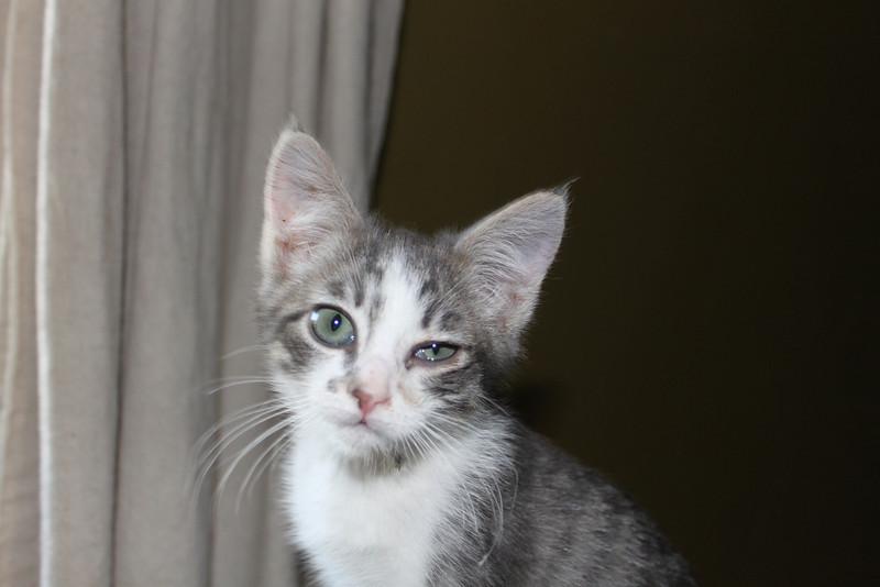 A grey tabby named Timmy.