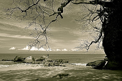 "Puerto Vallarta Photography, Magical Seconds Series by  International Award Winning Photographer Andres Barria ""Raices"""