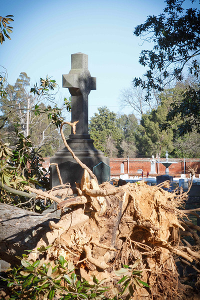 A severe storm went thru Augusta two days before the photo shoot, and there was some damage to trees in the cemetery, including this huge tree that was blown down.