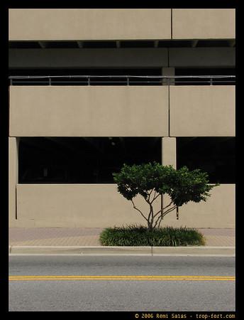 Sans-titre / Untitled  Ref. 22