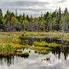 Maine Marshland