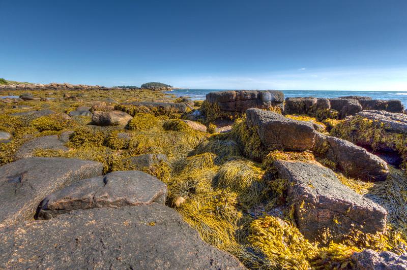 Mangy Rocks