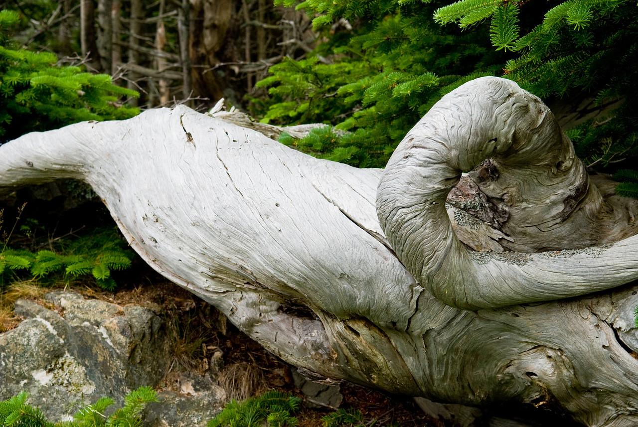 Acadia Driftwood