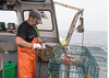 Watch a real lobsterman at his work.