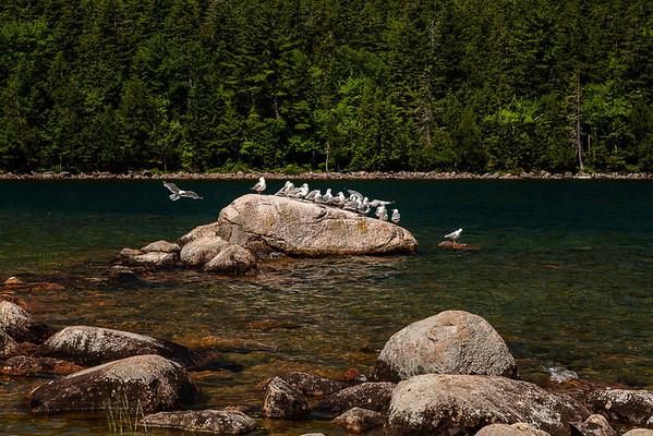 Maine trip