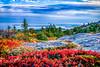 Fall Color, Cadillac Mountain