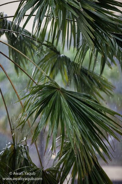 Rainy Day Kuala Lumpur