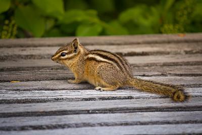 Bushy Tail Cuteness