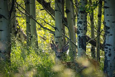 Buck's Hideaway
