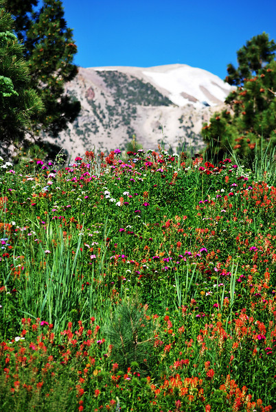 Mammoth Lakes in Summer