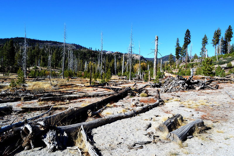 A Forest Fire Destroyed the Trees near Rainbow Falls near Mammoth Lakes California