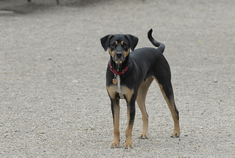 See EXIF DATA for details<br /> Madison Square Park Dog Run